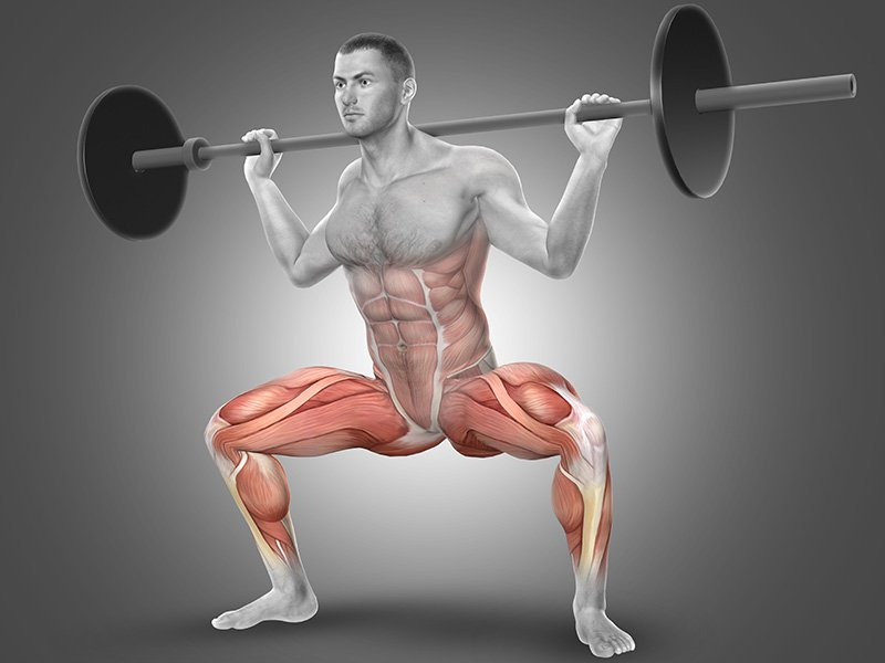 Targeted muscles during squat