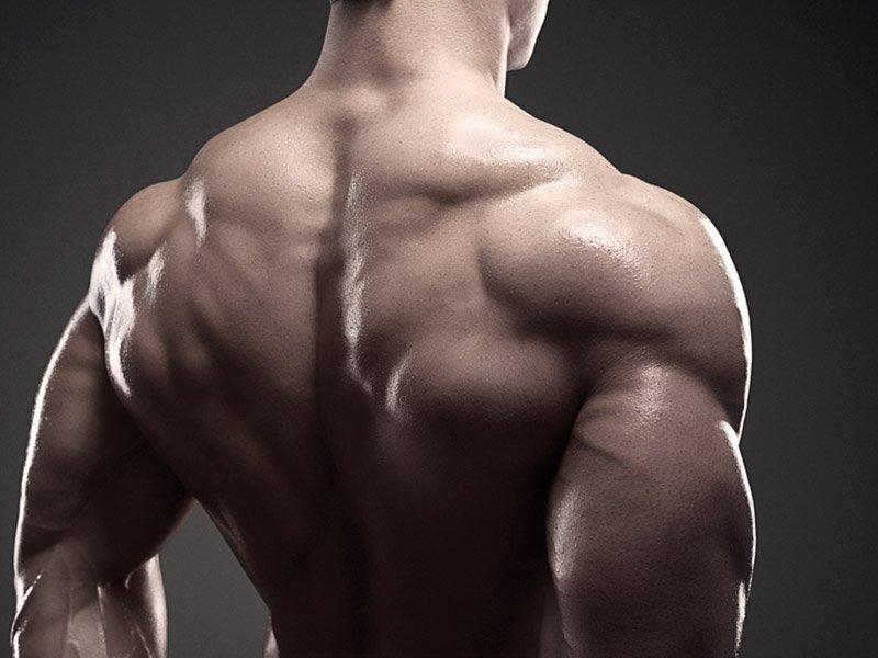 bodybuilder shoulders